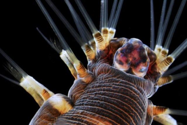 30 фантастических фотографий предметов и существ под микроскопом