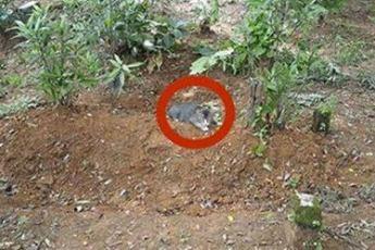 Мужчина оставляет еду и воду на могиле. То, что он видит на следующий день, лишает его дара речи
