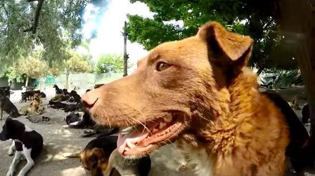 Человек не хотел видеть, как страдают собаки и спас 450 из них!