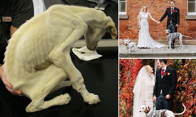 История голодавшего пса. Чудесное превращение в руках новой хозяйки!
