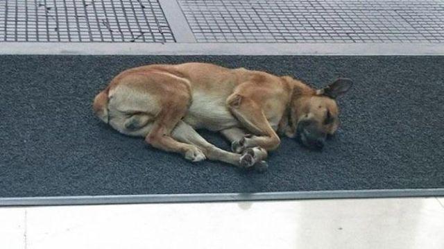 Эта собака 6 месяцев ждала женщину за пределами отеля. Вот, что произошло дальше…