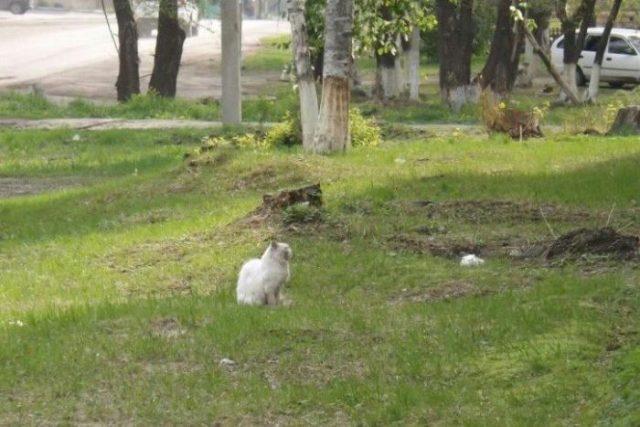 Кот четыре года преданно ждал хозяев, которые его бросили
