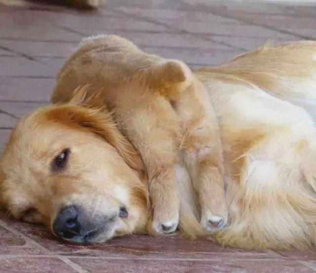10 фото о том, что животным тоже тяжело быть родителями