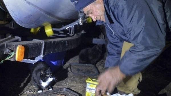 Кошачий ангел: сборщик металлолома уже 22 года кормит все бездомных кошек в округе