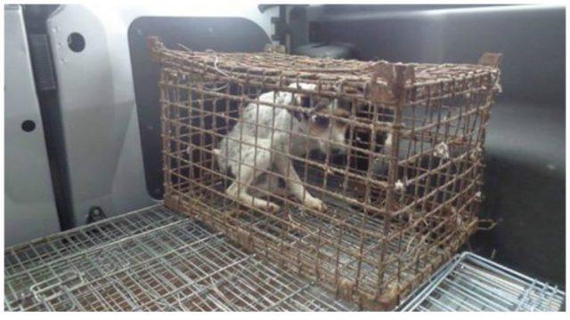 Собака Гусеничка провела всю жизнь в клетке и теперь не знает, как отблагодарить спасителей