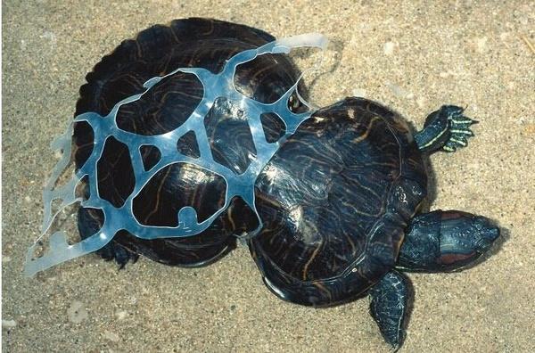 Фотофакты: жестокая правда о последствиях загрязнения окружающей среды