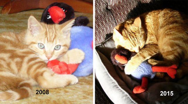 20 фото животных, которые росли вместе со своими игрушками