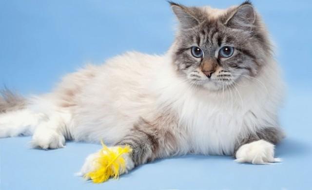 Поосторожнее с этими котиками: ТОП-10 злых пород