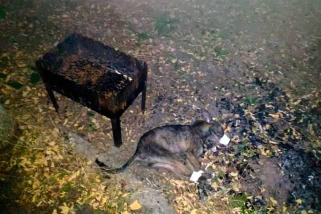 Ценой травм он отбил щенка у трех мужчин, которые планировали его съесть