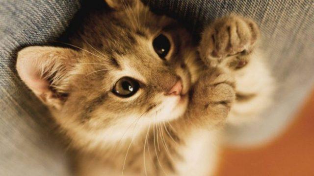 Именно от кошки зависит ваше благополучие! Не удивляйтесь, это правда!