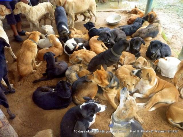 Мужчина стал папой для 735 бездомных собак