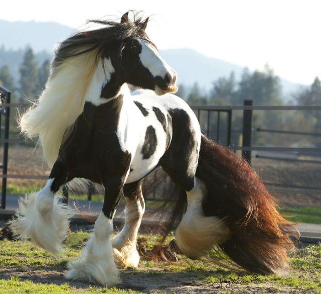 Если Вам когда-нибудь станет грустно, вспомните о этих лошадях с усами