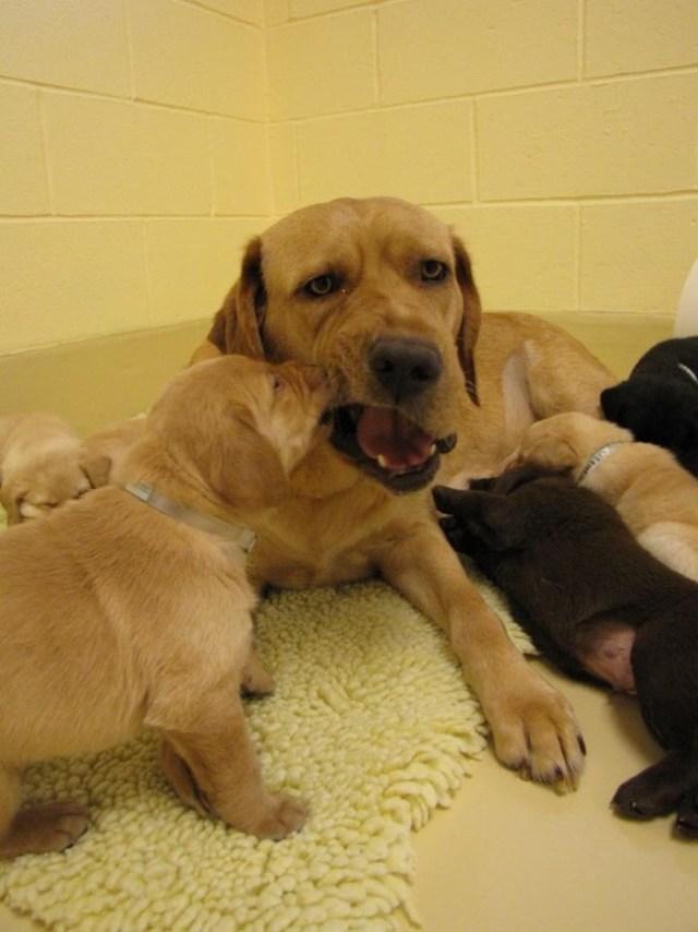 20+ заботливых мамочек, которые очень сильно устали