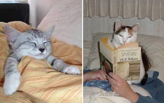 12 важнейших особенностей жизни с котиком: Ожидание и Реальность