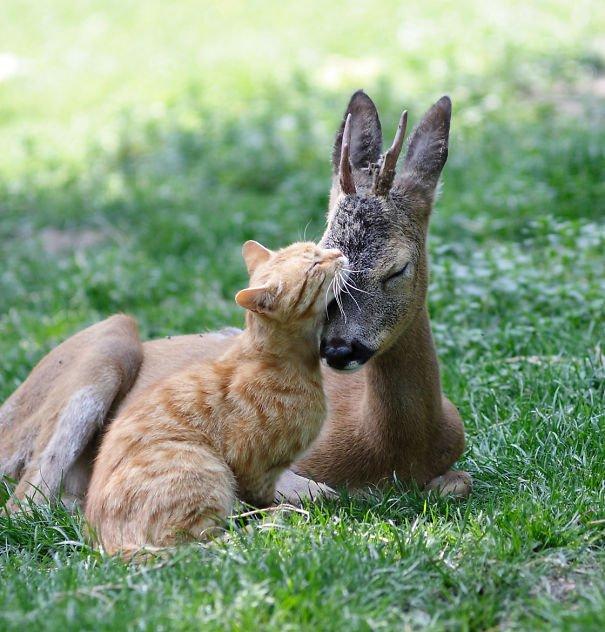 15+ фотографий самой необычной дружбы животного мира
