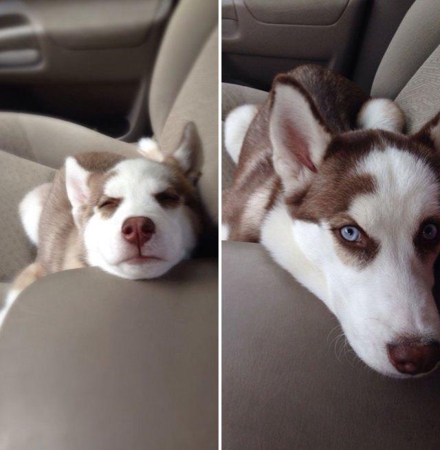 15 фото, показывающих, как быстро растут собаки