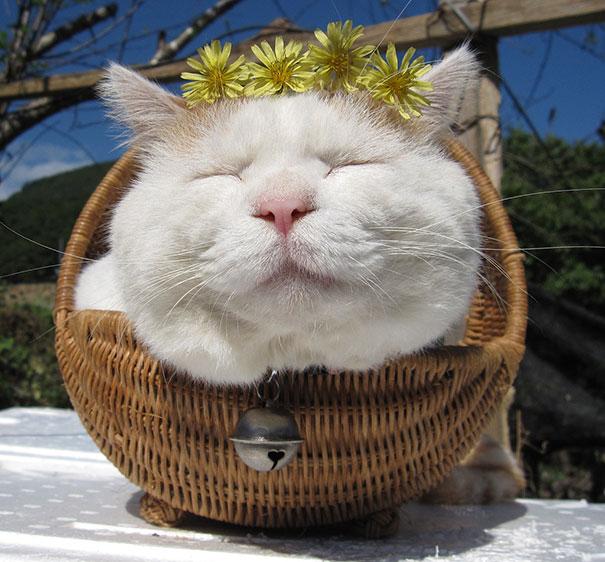 10+ самых знаменитых котов в Интернете