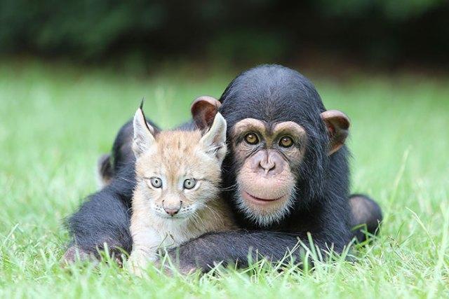 10+ примеров необычной дружбы животных, которые заставляют умилиться