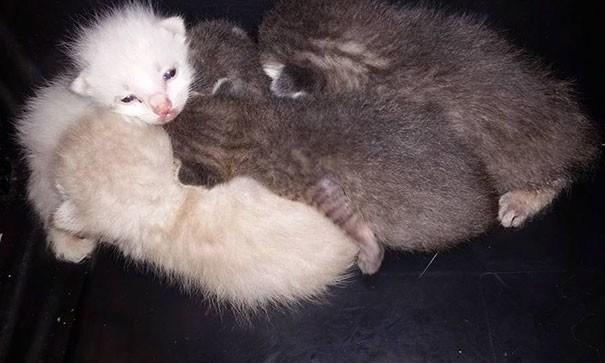 В течение семи часов мужчина спасал брошенных котят из помойки