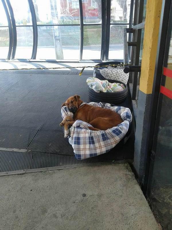 Автовокзал дает ночлег бездомным собакам и даже предоставляет каждой отдельную кровать