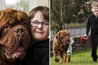 Родители случайно заметили, что пес всегда находится справа от мальчика. Оказалось, он кое-что знал