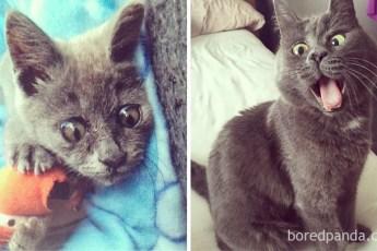 25 котят, которые с возрастом превратились в шикарных котов и кошек
