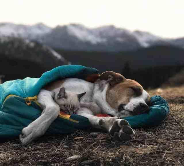 Этот пёс и кот уже несколько месяцев путешествуют вместе, и их фотографии просто восхитительны