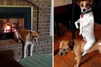 20 собак, которые делают странные вещи и это очень смешно