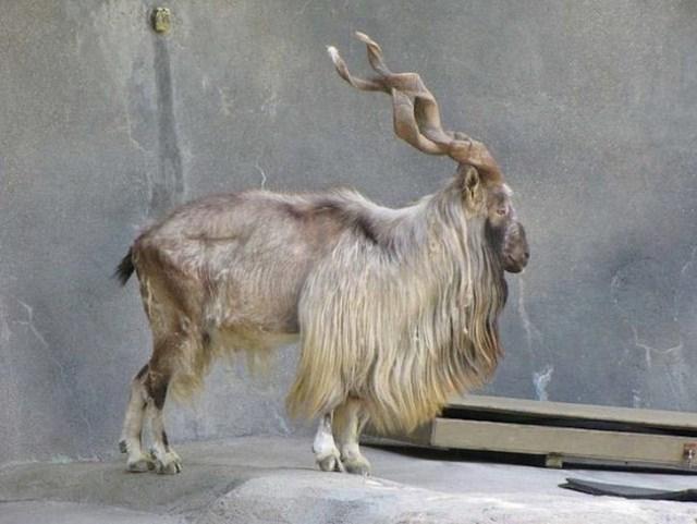 Редкие животные, которые вот-вот исчезнут с лица земли