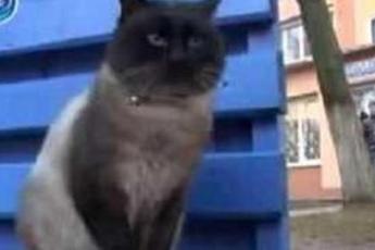 Хозяева выбросили кота на улицу, но он все так же преданно ждет их возвращения на одном и том же месте
