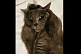 Хозяин решил отругать кота за смятую постель… Но что сделал кот, я такого никогда не видела…