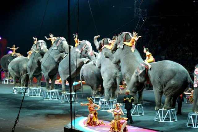 Хорошие новости: в цирках Шотландии запретили выступления диких животных