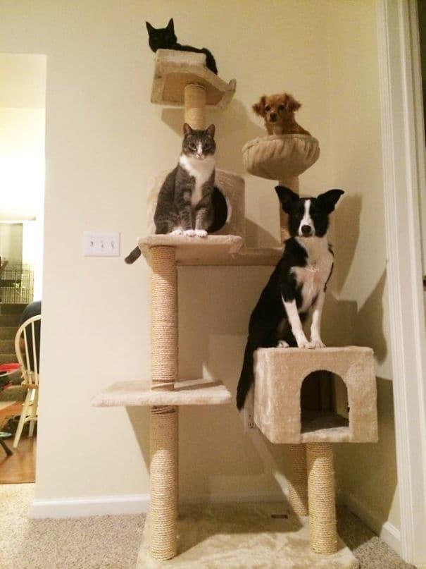 20 собак, которые упорно считают себя кошками, несмотря ни на что