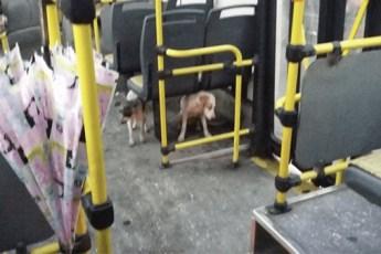 Водитель автобуса замечает уличных собак во время шторма — затем он нарушает все правила, совершая единственно верный поступок