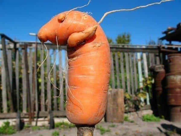 В огород пойдешь, что-то интересное найдешь (10 фото)