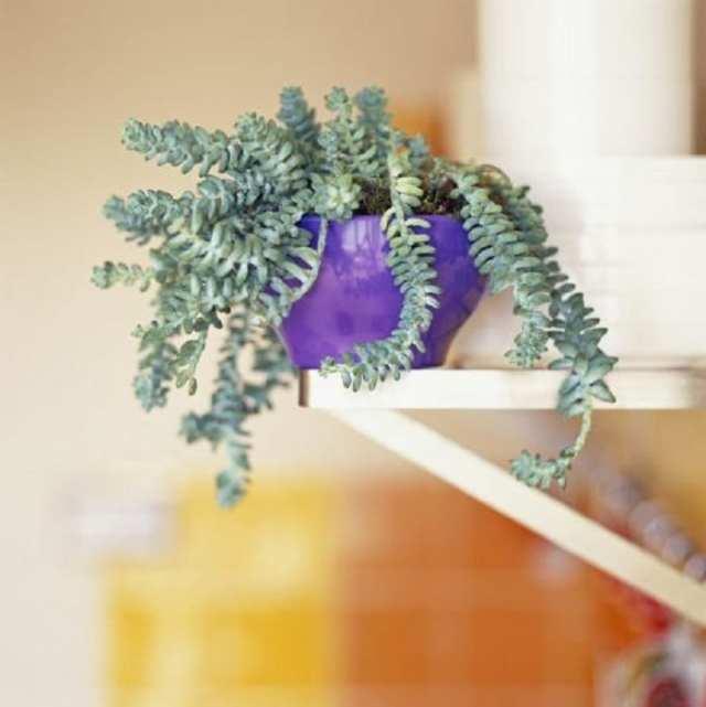 12 невероятных домашних растений, которые Вы никогда не видели!