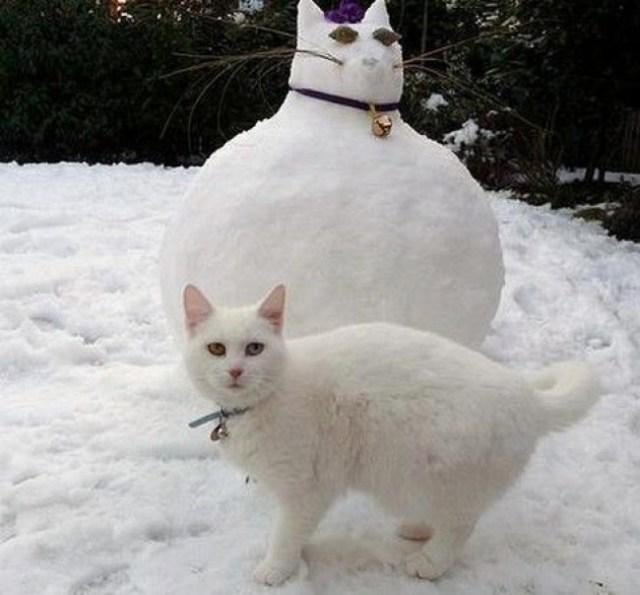 20 котов, которые подняли дерзость на новый уровень