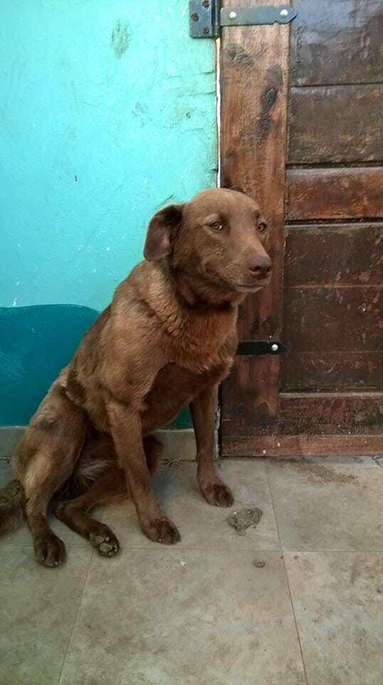 Грустная собака сидела в приюте 2 года, пока вдруг не почувствовала знакомый запах