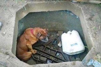 Собака, по кличке Белла, ждала свою страшную участь на дне колодца, когда на помощь к ней пришла 6-летняя девочка