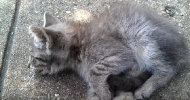 Одна единственная девушка помогла больному котенку, мимо которого равнодушно проходили люди