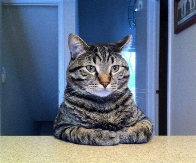 17 фото, доказывающих, что коты талантливые и многогранные личности