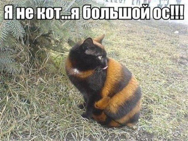 16 фотографий смешных котеек с забавными подписями.