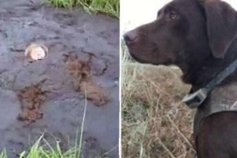 Собака вытащила хозяина из болота там, куда даже спасатели не могли добраться