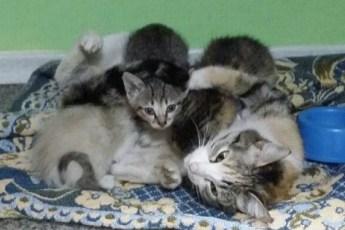 Кошка-героиня! Несмотря на поврежденный позвоночник, она смогла выкормить пятерых котят одна в покинутом доме