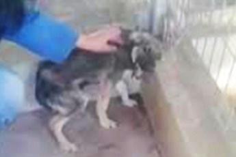 Бедную собаку первый раз в жизни не побили, а погладили. Не возможно сдержать слез