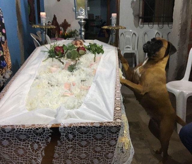 Хозяйка собаки умирала от рака, пес не отходил от нее ни на минуту, а потом пришел на ее похорон