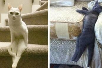 20 примеров очень странного поведения котов, которое удалось снять на камеру