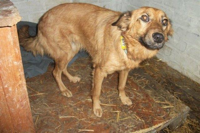 Хозяева бросили собаку голодать и уехали помахав ей ручкой