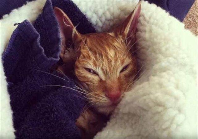 Потеряв всякую надежду спасти замерзшую кошку, человек вдруг замечает, что она немного двигает лапками