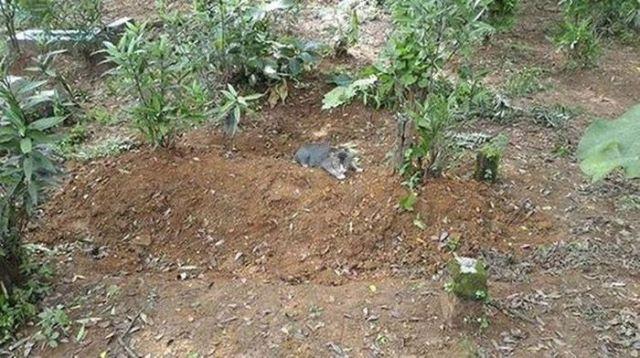Трогательная история про кота, который ежедневно приходит к хозяину на могилу